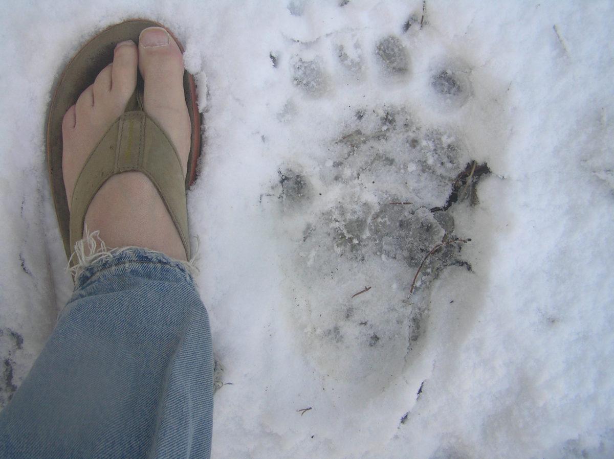 Colorado Bear Track